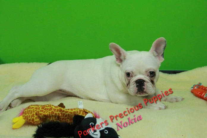 Nokia6 parkerspreciouspuppies .jpg